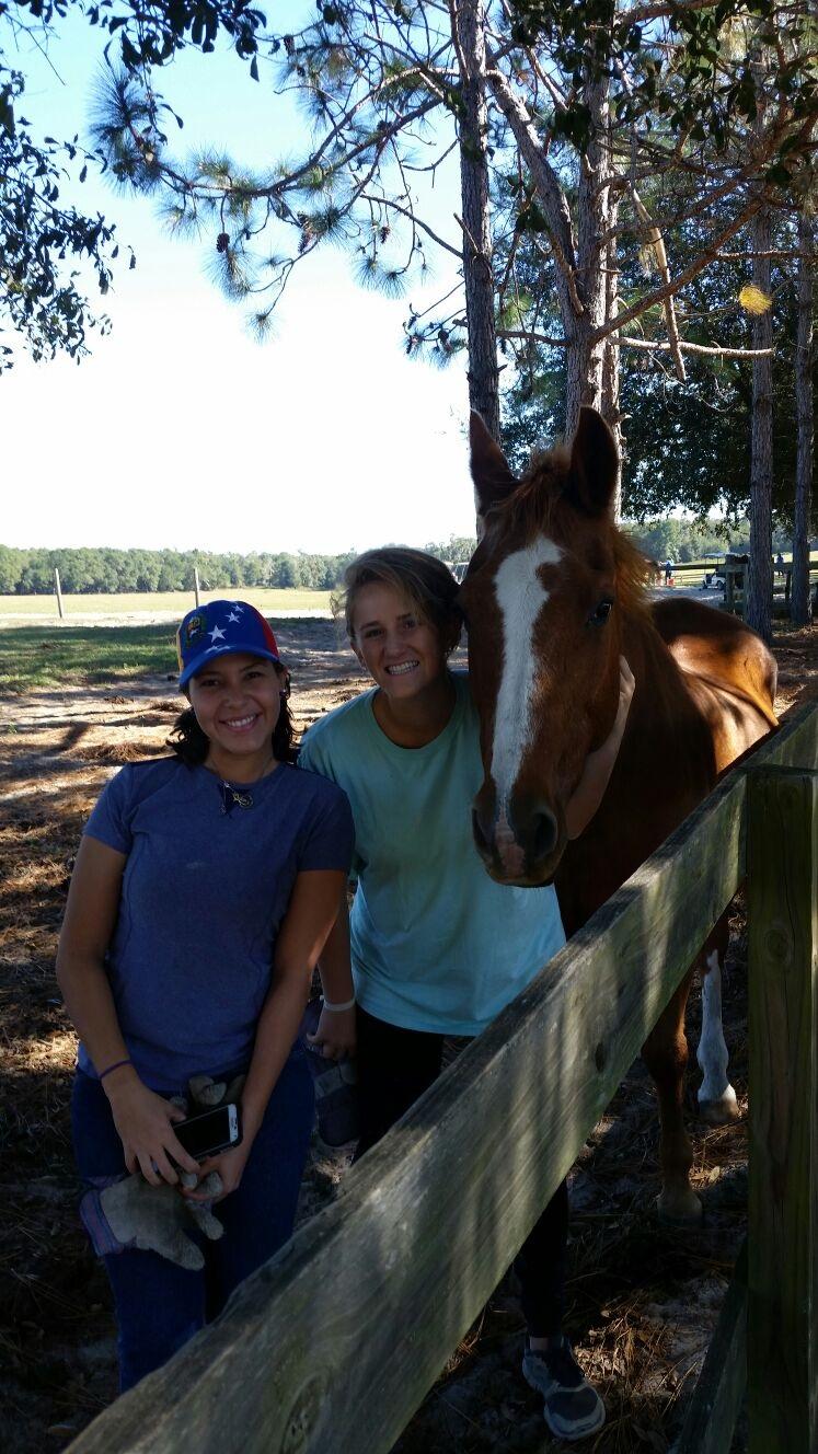 volunteering horse